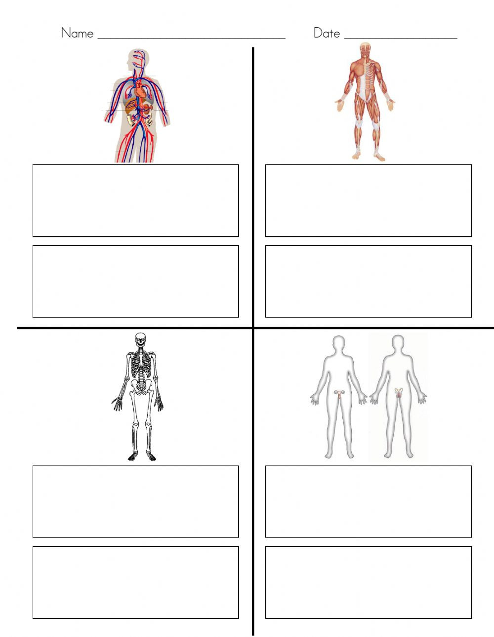30 Human Body Systems Matching Worksheet | Template Library